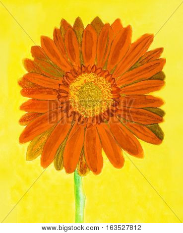 Orange gerbera flower on yellow background watercolor painting.