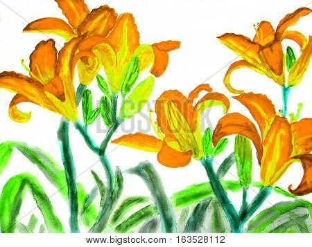 Hand drawn picture watercolour - orange-yellow lilies on white.