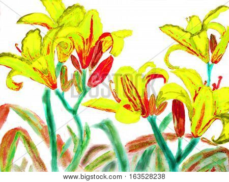 Hand drawn picture watercolour - yellow-red lilies on white background.