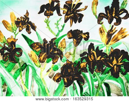 Black daily lilies hand drawn painting water colours.