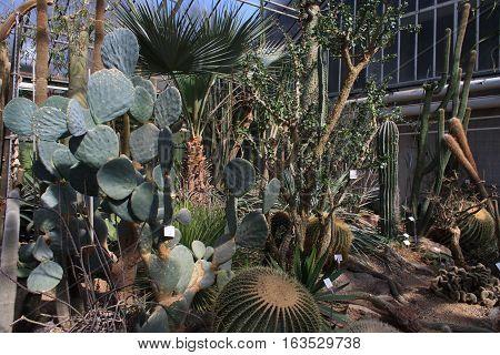 HEIDELBERG, GERMANY - MAR 30, 2014: Cactus landscape. Many cactuses. Succulents. Botanischer Garten Heidelberg.
