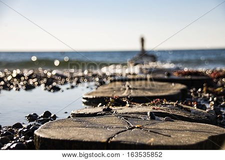 Wooden breakwaters on a shore of the Baltic Sea with a man standing on the edge of the close-up photo