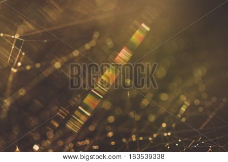 Shallow depth of field cobweb macro abstract