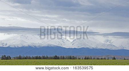 Andes and Vineyard Panorama, Uco Valley, Mendoza