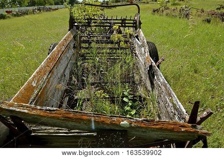 Plants and shrubs are growing through the floor of an old rusty  wooden box manure spreader
