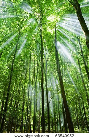 Nature. Green forest with sun and sunlight