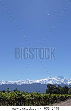 Andes & Vineyard & Aircraft Vapour Trail, Mendoza