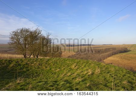 Winter Landscape With Tumulus