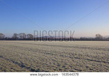 Frosty Wheat Field