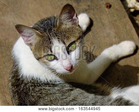 Cat Sitting On The Wooden Floor