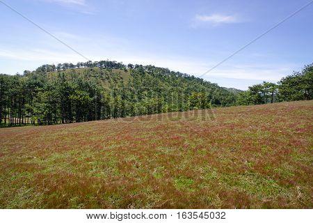 Landscape With Grass Hill In Dalat, Vietnam