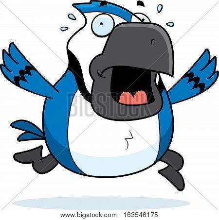Cartoon Blue Jay Panic