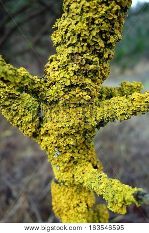 green orange Lichen on tree in autumn