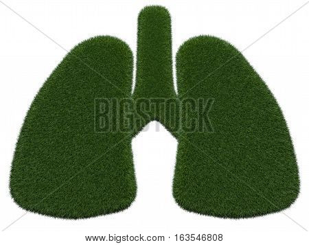 Grassy lungs on white background. Isolated digital illustration. 3d rendering