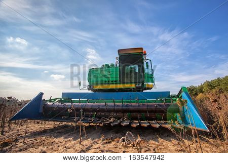 Big green harvester in the field on a sunny day mowing ripe dry sunflower seeds. Autumn harvest.