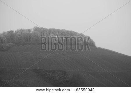 Vineyard Black White Weinreben vine landscape Schwarz weiss