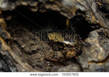 Hollow of a brown tree with leaves