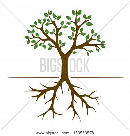 Color Tree with Roots and Leafs. Vector Illustration.