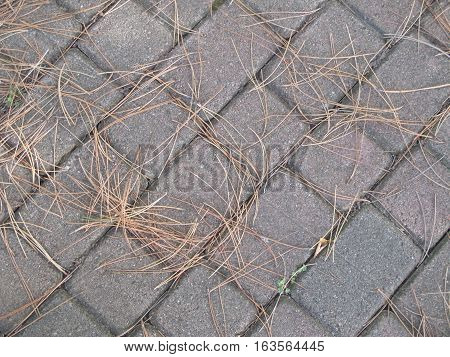 Needles from a red pine tree (Pinus resinosa), which have fallen on a garden path, contrast with its orderly pattern of square and rectangular paving stones. Southeastern Michigan.