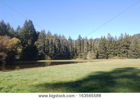 Redwood forest in northern California sits behind a lake and open field