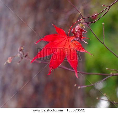 Landscape Of Japanese Garden At Autumn
