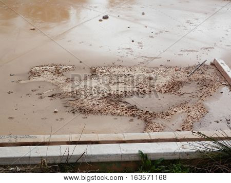 Dried out mud in storm canal in Malaga looking like Roadrunner Bird