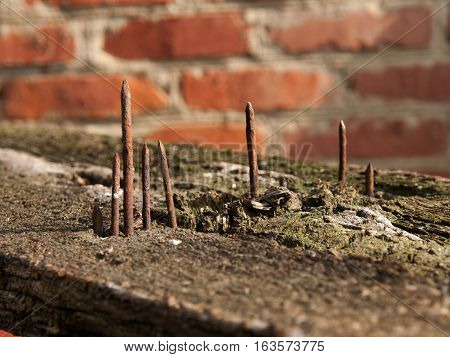 Old rusty nails protruding from weathered wooden plank