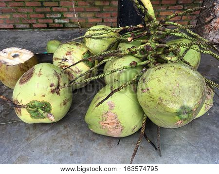 many were cut off from the coconut palm blossoms, fruit, green color, lying on the ground