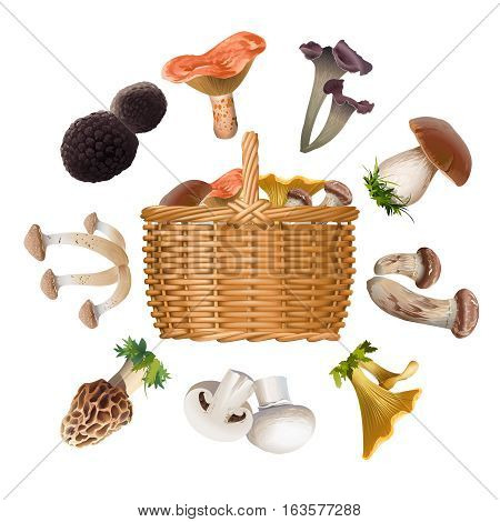 Vector collection of various species of edible mushrooms and basket with mushrooms isolated on white. Realistic style