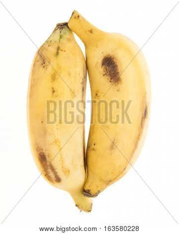 Dual Yellow Banana