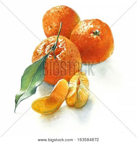 Watercolor illustration of three mandarins with green leaf and pieces on white background