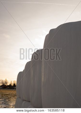 Round hay bales in plastic wrap cover outdoors