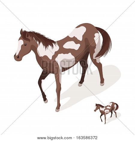 Isometric 3d vector illustration of pinto horses. Icon for web. Isolated on white background.