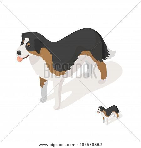 Isometric 3d vector illustration of sheep dog isolated on white background. Icon for web. Front view.