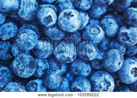 Bilberry background texture nature. Top view blue