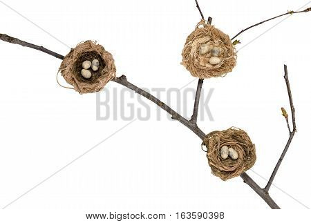 bird's nest on a branch on on white background. Isolated