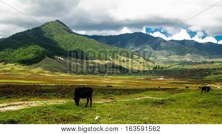 Landscape of mountain Phobjikha valley Himalayas Bhutan