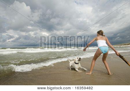Labrador retriever playing on the beach. poster