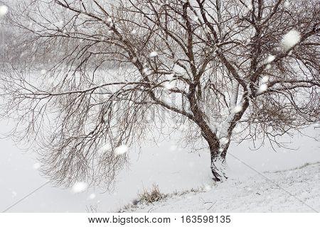 Tree Under Snowfall