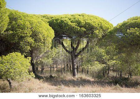 Europe Portugal Algarve Olhao Quinta De Marim