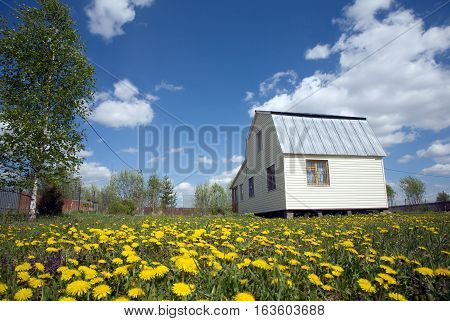 Landscape with nice suburban house, covered with light siding on lawn with lot yellow dandelions in summer day