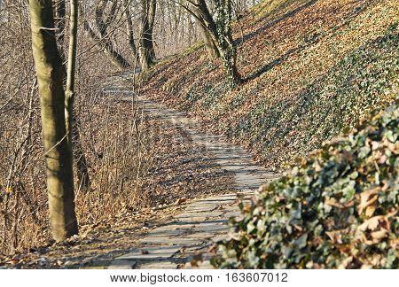 narrow paved way leading through the park with bare trees and green ivy in autumn