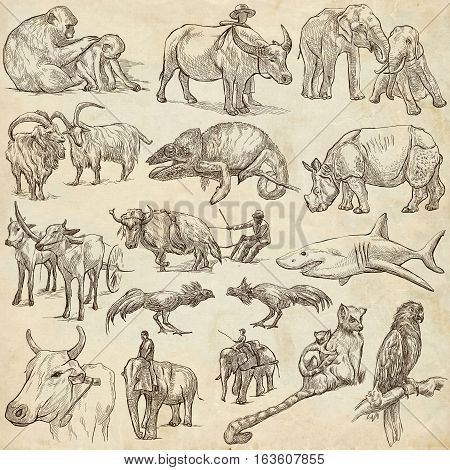 Hand drawn illustratoins of Animals around the World. Different snapshots. Full sized hand drawing collection. Pack of freehand sketches on old paper.