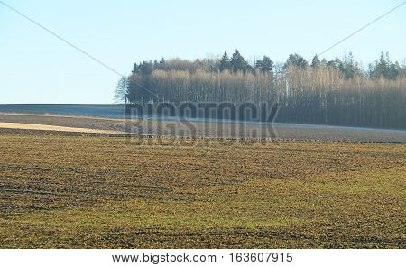 landscape with ploughed field and bare forest in autumn