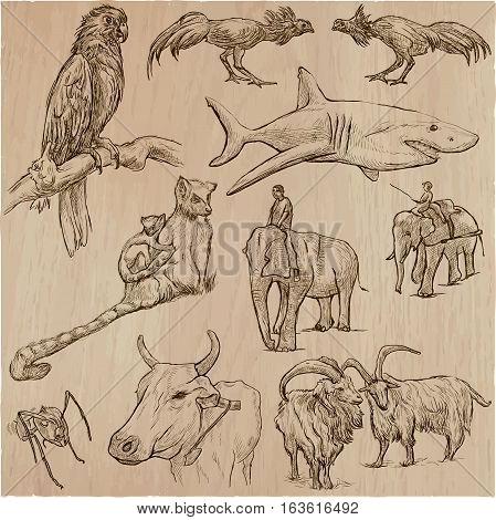 Animals around the World. Collection of an hand drawn vector illustrations. Each drawing comprises of three layers of outlines the colored background is isolated.