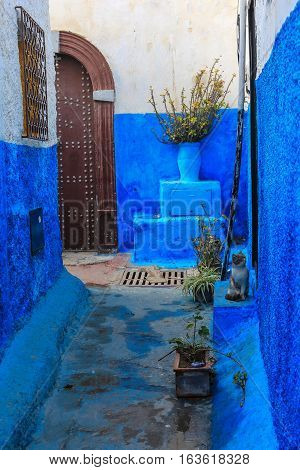 Blue Alleyway With Cat In Morocco