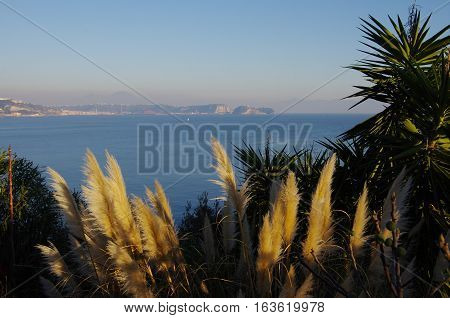 Bush Of Cortaderia And The Gulf Of Naples