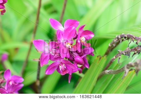 purple orchid flowers the natural in the garden
