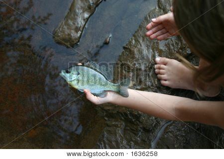 Fish In The Hand Is Worth Two In The Stream 2