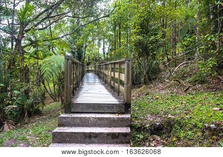 Boardwalk on a trekking trail in a forest in Kinabalu Park,Ranau,Sabah.It is Malaysia's first World Heritage Site & the important biological sites in the world with various species of flora & fauna